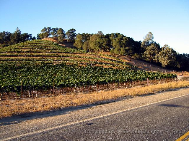 Vineyards on Pope Canyon